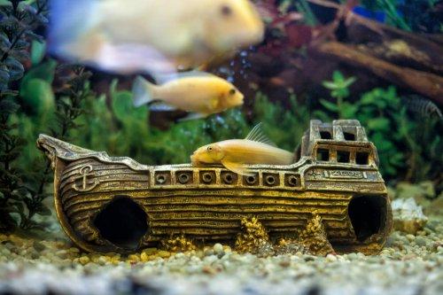 Ingin Menghias Akuarium Ini 10 Rekomendasi Hiasan Akuarium Unik Yang Ramah Di Kantong