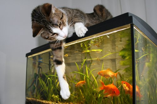 Punya Akuarium Di Rumah Ini Tips Memelihara Dan Memilih Ikan Hias Yang Tepat Beserta 10 Rekomendasi Ikan Hias Terbaik