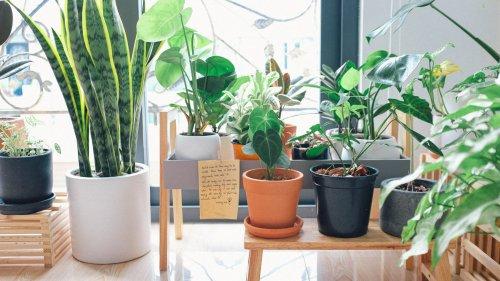 Ingin Rumah Yang Estetik Pilihlah 10 Rekomendasi Rak Bunga Yang Cantik Ini 2019