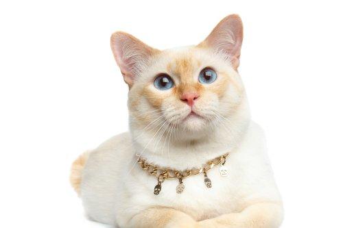 Unduh 94+  Gambar Kucing Anggora Animasi Paling Imut Gratis