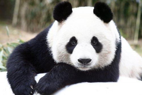 840 Gambar Hewan Beruang Lucu Gratis Terbaru