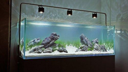 Tertarik Membuat Aquascape Ini 10 Langkah Membuat Aquascape Minimalis Dan Rekomendasi Produk Yang Bisa Anda Gunakan