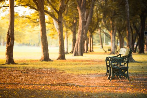 57 Gambar Sketsa Kursi Taman HD