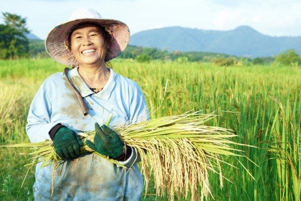 Rekomendasi Terbaik 7 Mesin yang Membantu Proses Panen Padi bagi Industri Pertanian (2020)