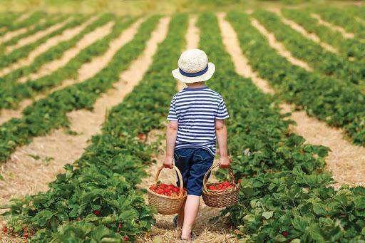 8 Rekomendasi Agrowisata Populer untuk Menghabiskan Waktu Berlibur Bersama Keluarga
