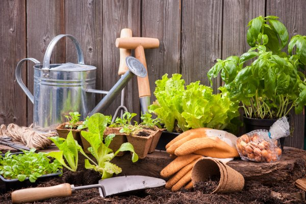 11 Rekomendasi Tanaman Hias yang Indah untuk Taman yang Bikin Anda Betah di Rumah