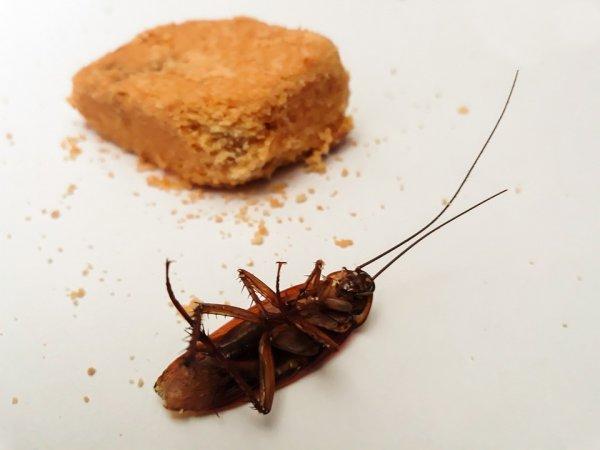 Geram dengan Kecoa di Rumah? Ini 10 Rekomendasi Pembasmi Kecoa Terbaik yang Paling Ampuh
