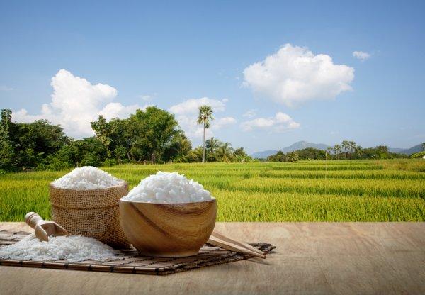 6 Makanan Olahan dari Beras untuk Inspirasi Hidangan Spesial Keluarga