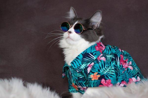 Gợi ý 10 mẫu quần áo thú cưng siêu dễ thương nên mua nhất (năm 2021)