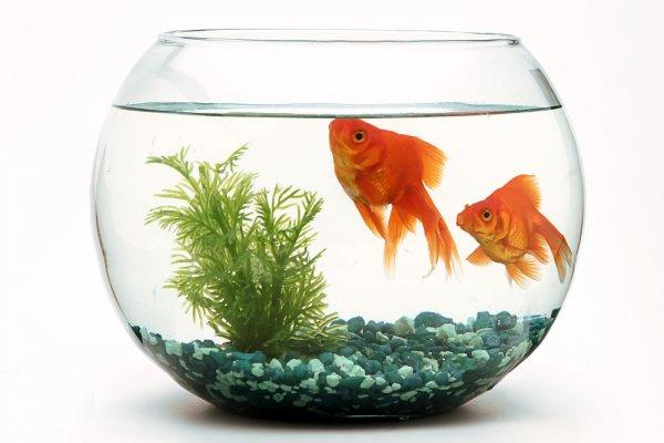 Unduh 47 Gambar Ikan Hias Di Akuarium Terpopuler