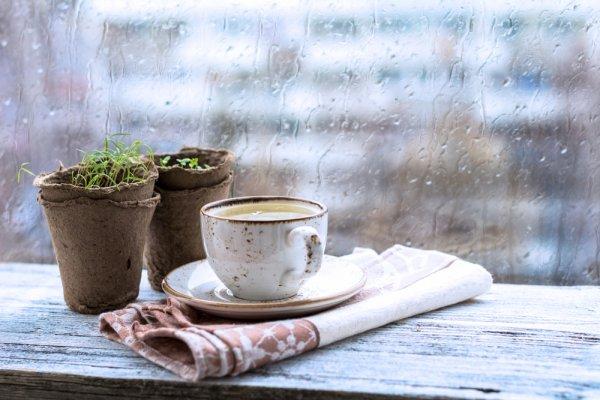 10 Minuman Panas yang Selalu jadi Pilihan ketika Cuaca Dingin dan Hujan