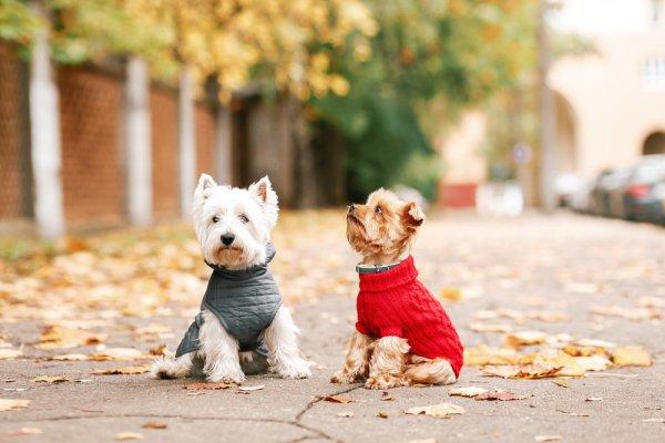 Top 10 bộ quần áo siêu đáng yêu cho thú cưng bạn nên mua (năm 2021)