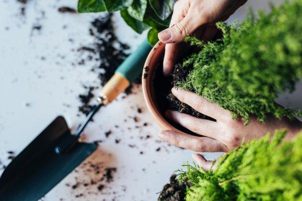Berkebun Makin Asyik dengan 10 Peralatan yang Harus Anda Miliki dan Tips Sukses saat Berkebun di Rumah