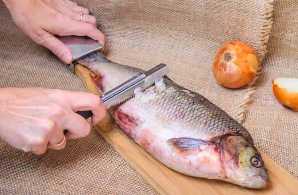 Mengolah Ikan Lebih Mudah dan Praktis dengan 10 Rekomendasi Alat Pembersih Sisik Ikan Ini (2021)
