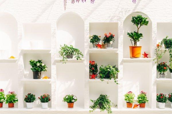 10 Rekomendasi Rak Bunga Cantik untuk Menata Koleksi Tanaman Hias (2021)