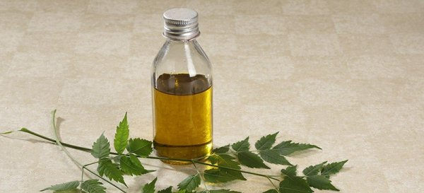 Ever Considered Neem Oil for Hair? Here is Why You Have to in 2020!