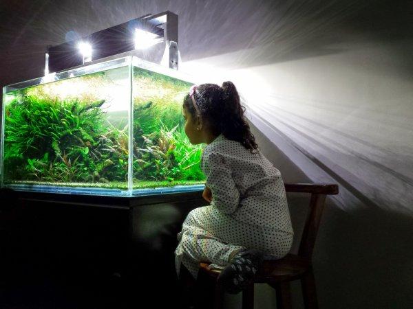 Yuk Pelihara Ikan di Rumah, Ini 10 Rekomendasi Akuarium Terbaik untuk Anda (2020)