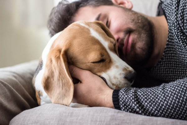 Know Someone Who Can't Live Without Their Beloved Pet Pooch? Here are 10 Amazing Personalized Gifts for Dog Lovers in Your Life (2019)
