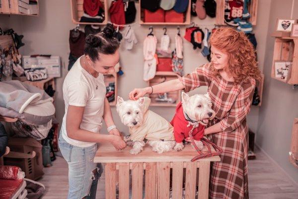 Gợi ý 10 shop quần áo thú cưng phong phú, chất lượng ở TPHCM (năm 2021)