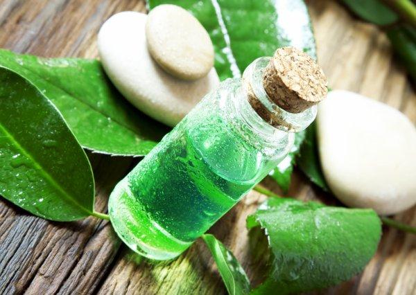 Ingin Wewangian Aroma Green Tea yang Segar? Yuk Intip 8 Rekomendasi Parfum Green Tea di Sini!
