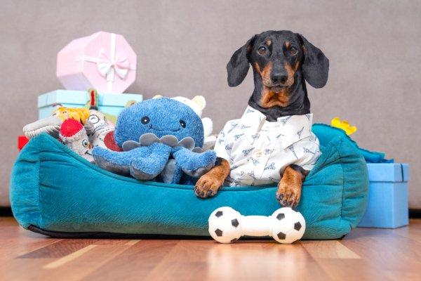 Top 10 món đồ chơi cho thú cưng siêu ngộ nghĩnh (năm 2021)