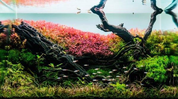 Gunakan 10 Rekomendasi Water Conditioner untuk Kelangsungan Hidup Ekosistem pada Aquascape-mu!