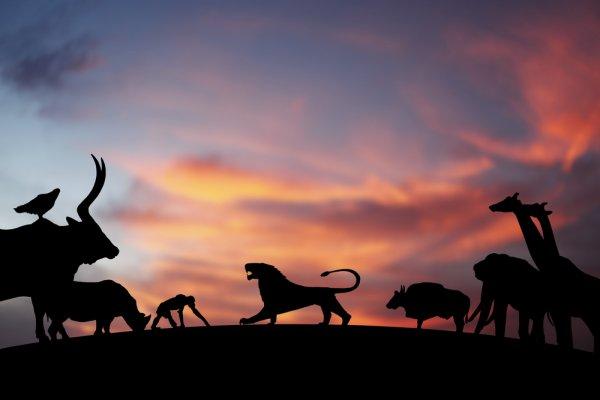 Ayo Kenali 7 Hewan Tercepat di Bumi dalam Daftar Berikut! (2020)