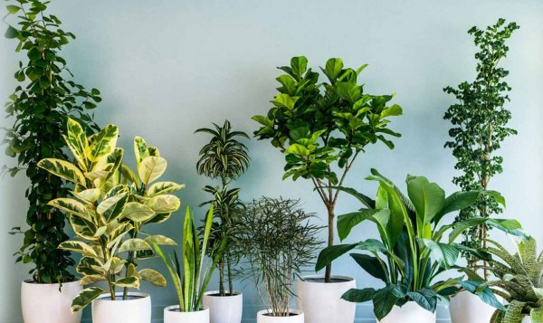 Bring the Outdoors into Your Home: Ideas for Home Decor with Plants. Plus 10 Perfect Indoor Plants for Your Living Space (2020)