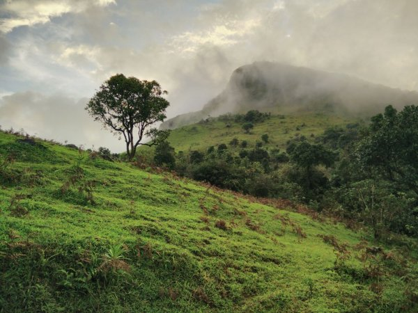 Experience Nature at Its Best: Visit the Heart Of Coorg, Here Are the 10 Best Places to Visit in Madikeri (2019)