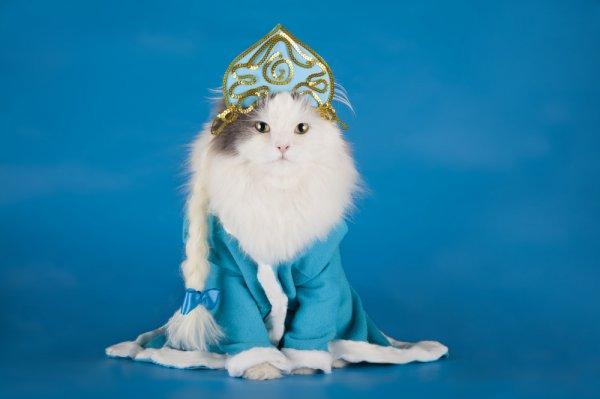 Jadikan Kucing Peliharaan Semakin Menggemaskan dengan 9 Rekomendasi Baju Kucing Unik Ini (2019)