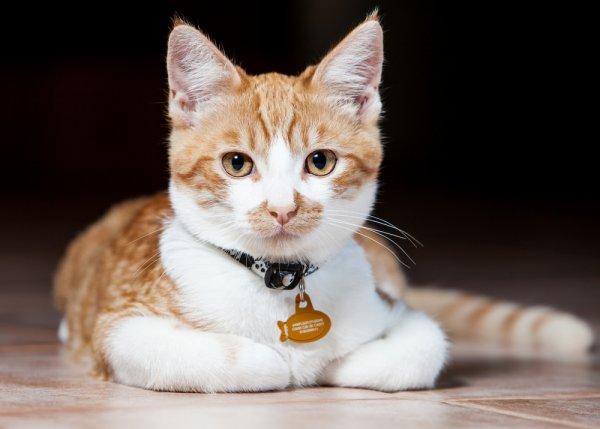 Buat Kucingmu Mudah Dikenali Dengan 10 Rekomendasi Kalung Kucing Keren Dari Bp Guide 2019