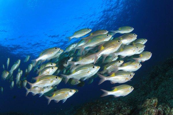 10 Ikan Yang Sebaiknya Tidak Dimakan Demi Kesehatan