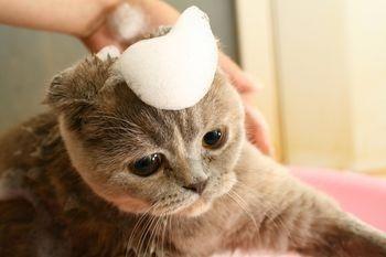 10 Rekomendasi Sampo untuk Kucing 2018 supaya Si Meong Tetap Bersih dan Cantik
