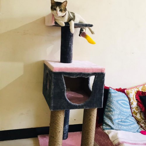 Cat Trees are the Perfect Way to Give Your Feline Friends Their Own Kingdom and Get Them Connected with Their Wild Side