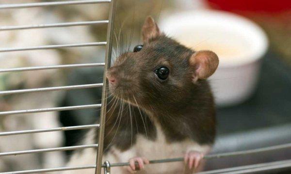 Tak Hanya Murah, 9 Rekomendasi Perangkap Tikus Ini Juga Mudah Dibuat Lho (2018)