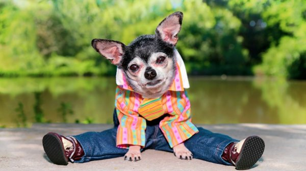 Ever See those Cute Dog Videos Online Wearing Such Adorable Clothes? Now Get Some for Pooch As Well:  Cutest Dog Clothes You Can Order Online (2020)