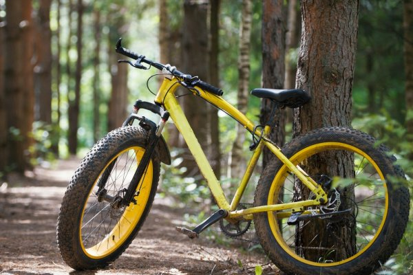 Makin Garang Bersepeda Dengan 9 Pilihan Sepeda Roda Besar Rekomendasi BP-Guide