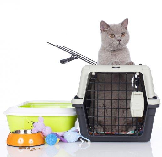 Ini Dia 10 Aksesori Kucing yang Perlu Kamu Miliki ketika Memelihara Kucing