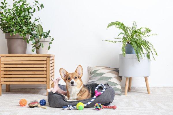 Gợi ý 10 món đồ chơi và chăm sóc dành cho thú cưng (năm 2021)