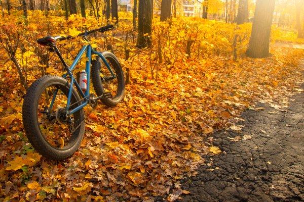 10 Rekomendasi Sepeda Gunung Ban Besar untuk Berolahraga agar Makin Bugar (2021)