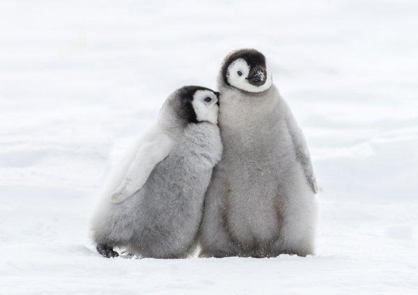 10 Rekomendasi Boneka Penguin Lucu untuk Anak Anda caec2d58a6