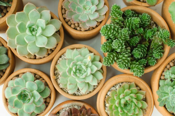 If You're Concerned About the Planet, Turn to Eco Friendly Return Gifts Like Plants! 10 Party Favour Plants to Give in 2019