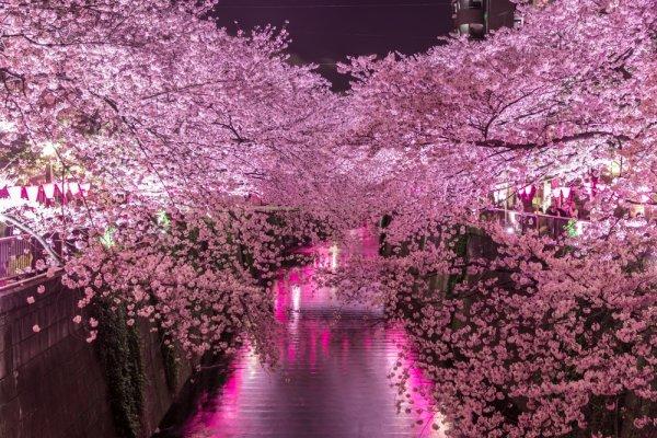 5 Hal yang Bikin Tour Murah ke Jepang Itu Nyata!