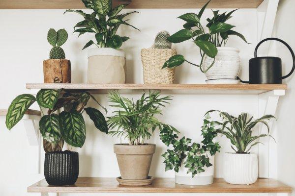 Bikin Rumahmu Estetik dan Asri dengan 10 Rekomendasi Rak Bunga Kayu untuk Memperindah Rumah (2020)