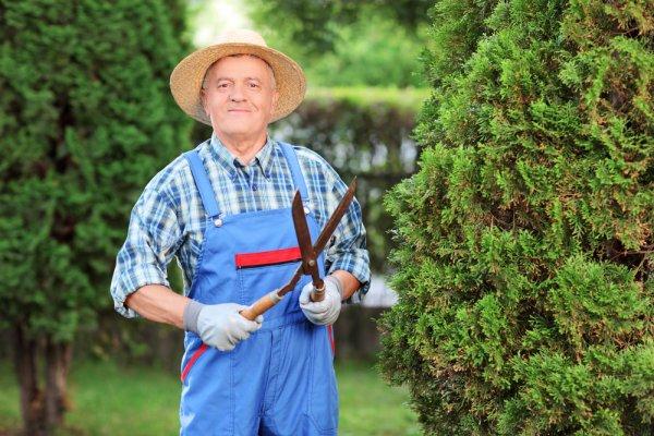 9 Rekomendasi Gunting Rumput Terbaik untuk Merawat Kebun dan Rumput Hias Anda (2020)
