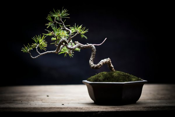 10 Tree Gifts You Should Be Gifting in 2019: Bonsai, Dwarf Trees, Saplings and Potted Plants & Tips on Caring for Plants