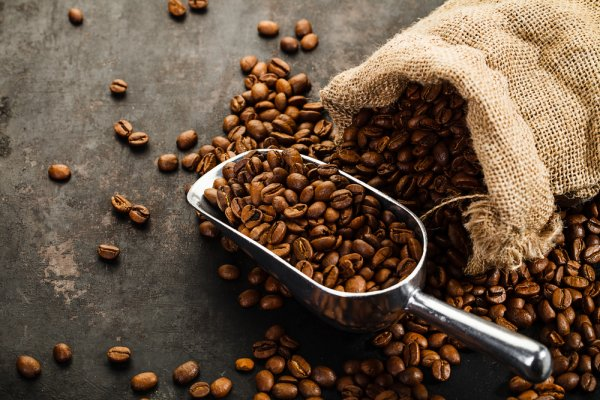 Know What's Brewing Behind a Cup of Coffee: 8 Types of Coffee Beans That Are The Best For That Cuppa(2019)!