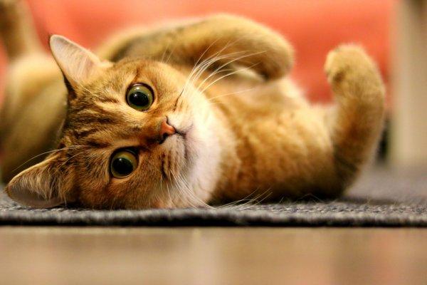 Jangan Sampai Kucingmu Stres! Inilah 9 Mainan Kucing yang Bisa Kamu Gunakan untuk Menghindari Kucing dari Stres