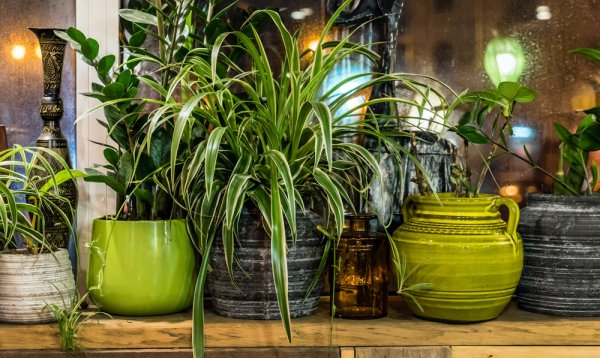 10 Tanaman yang Ampuh untuk Mengusir Serangga di Rumah
