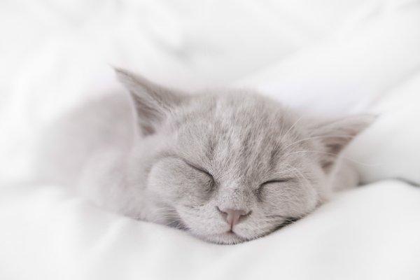 Kucing juga Butuh Dimanjakan, Ini 5 Rekomendasi Bantal Kucing yang Pas untuk Kesayangan Anda (2019)